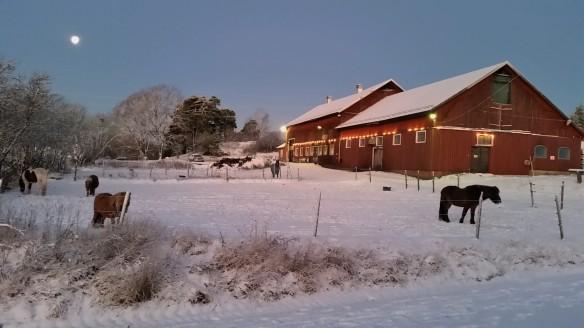 Vinter i stallet